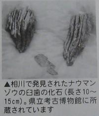 20090227-4.jpg