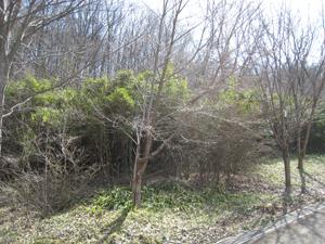 20090318-9.jpg