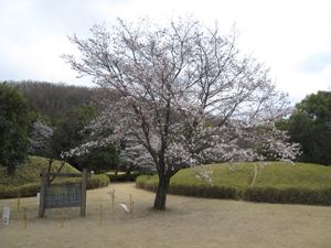 20090326-3.jpg