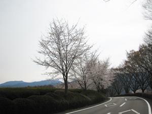 20090328-5.jpg