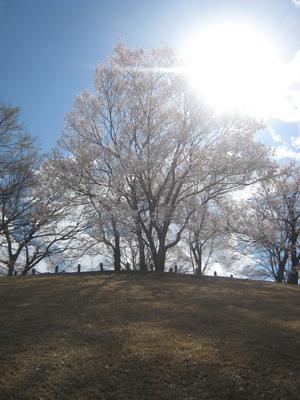 20100326-7.jpg