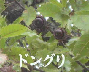 20101029-28.jpg