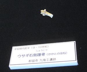 20110107-8.JPG