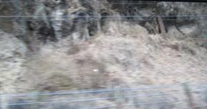 20110309-17.jpg