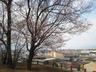 20110330-5.jpg